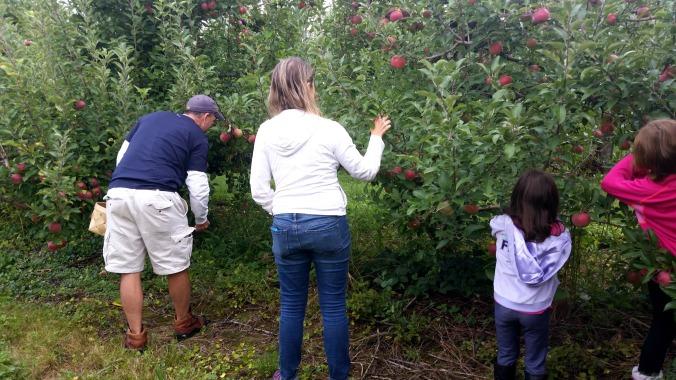 apple picking 4  brandie-sellers.com