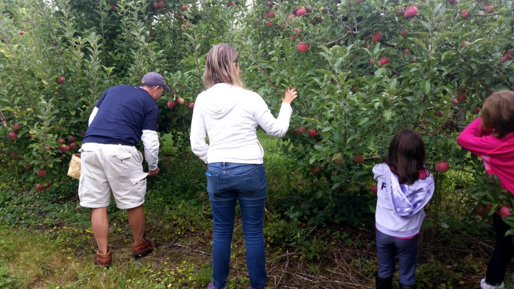 apple picking 4  brandie-sellers.com