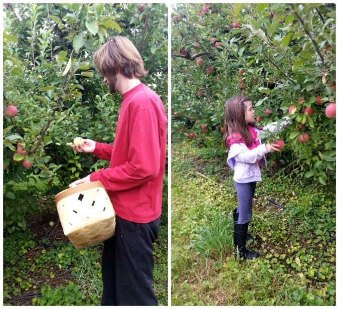 apple picking 5  brandie-sellers.com