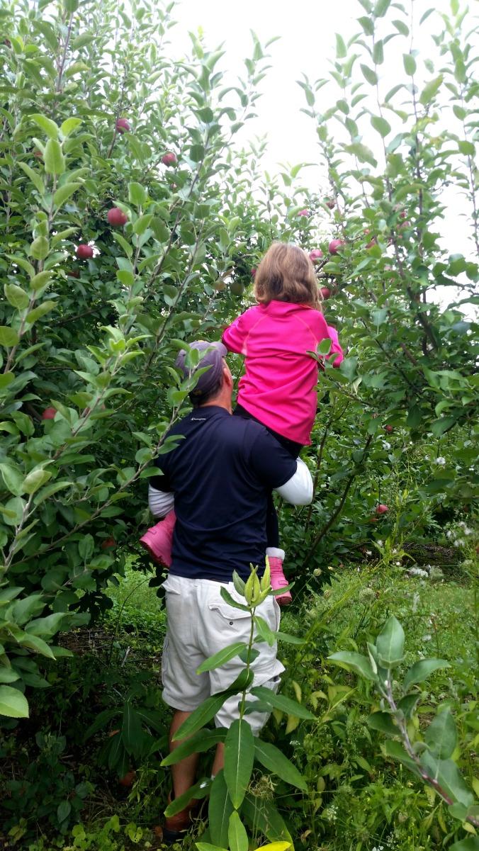 apple picking 6  brandie-sellers.com