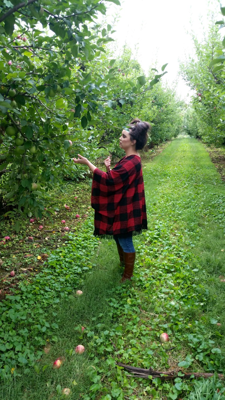 apple picking 8  brandie-sellers.com