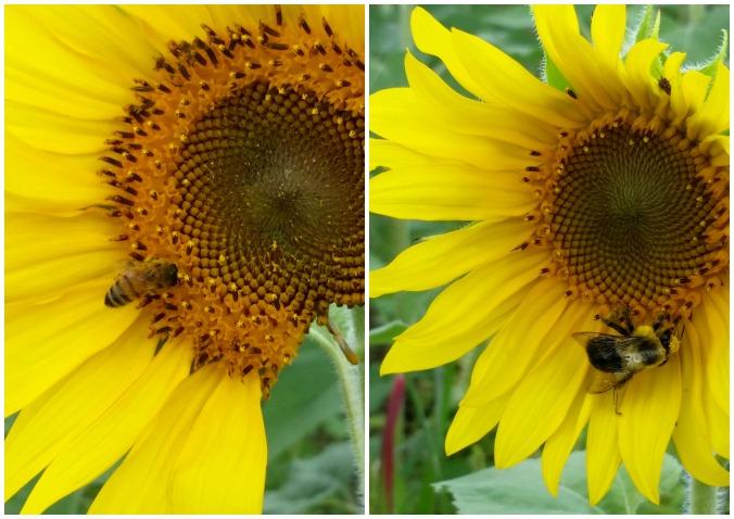 bees  brandie-sellers.com