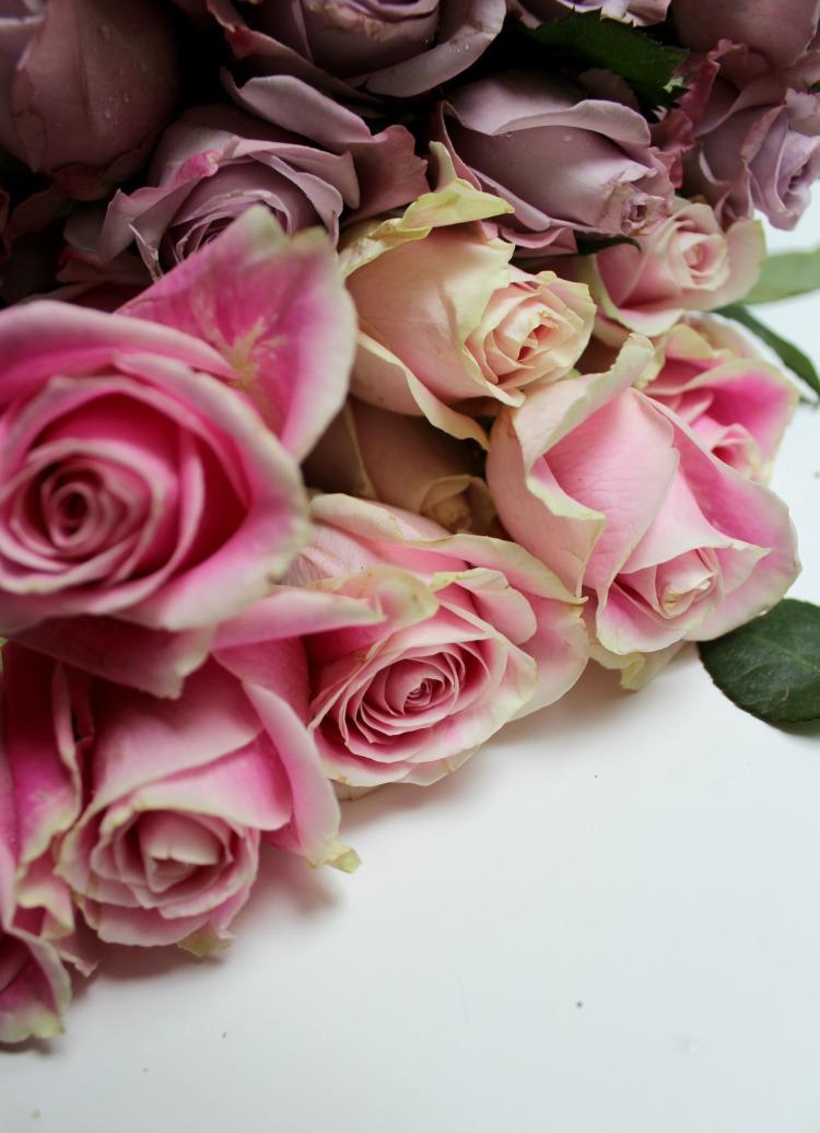 roses 4  brandie-sellers.com
